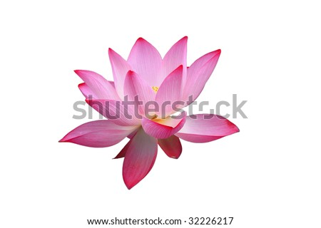 isolated beautiful red lotus on the white background