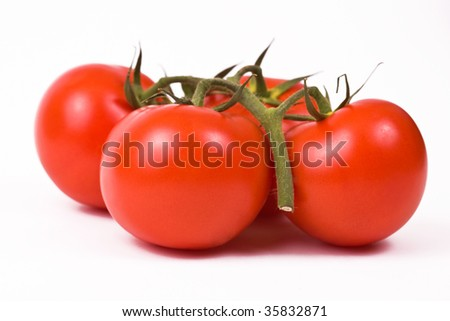 Isolated beautiful tomatoes on the vine