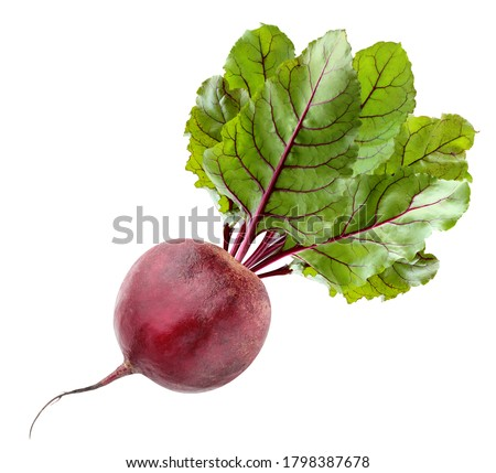 Photo of  isolated beets. one beetroot with tops isolated on white background with clipping path. vegetable, root vegetable.
