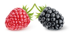 Isolated berries. Fresh raspberry and blackberry over white background, with clipping path