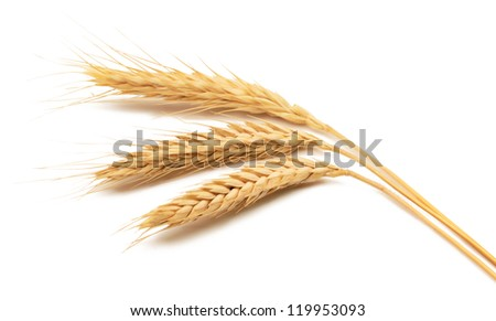 Isolated bunch of golden wheat ears