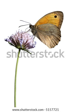 Isolated butterfly on flower