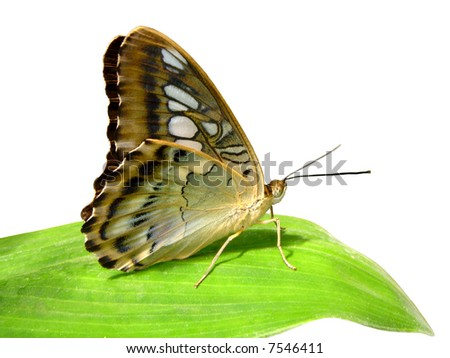 Isolated Butterfly on leaf