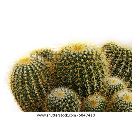 isolated cactus plant