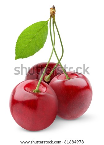 Isolated cherries. Three sweet cherry fruits isolated on white background