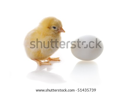 stock-photo-isolated-chicken-and-egg-on-a-white-background-51435739.jpg