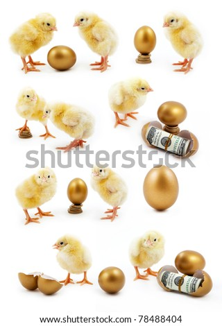 isolated chicken on a white background