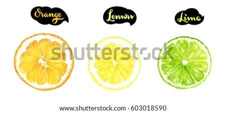 Isolated citrus slice fruits watercolor hand drawn illustration. Orange, lemon, lime isolated on white background.