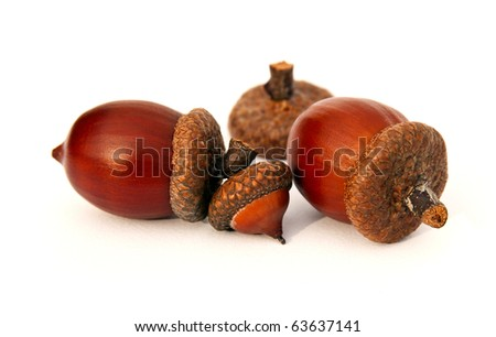 Isolated clean acorns