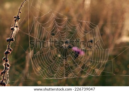 isolated close-up cobweb on the dry grass misty autumn morning #226739047