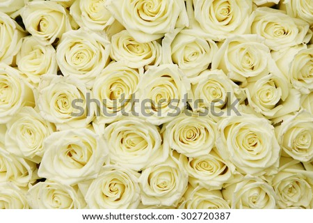 isolated close-up of a huge bouquet of white roses