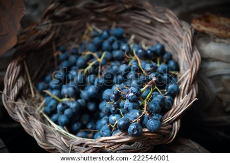isolated clusters of grapes on wicker basket