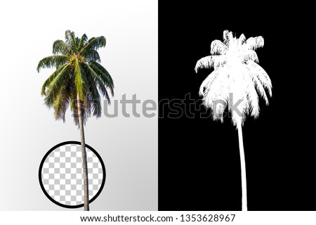 Isolated coconut palm tree on white background with high quality mask alpha channel and clipping path. Suitable for natural articles both on fine print and web page. #1353628967