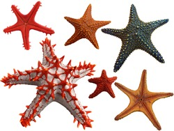 Isolated Collection of different starfish