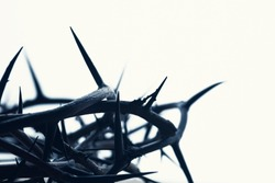 Isolated Crown of thorns with a white background.