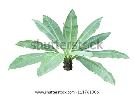 Isolated Decor banana with clipping part for easy to use for garden and architecture job.