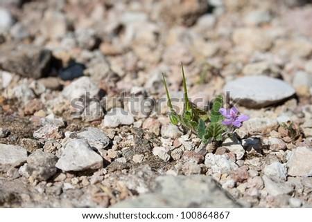 Isolated desert plant growing on rocks.