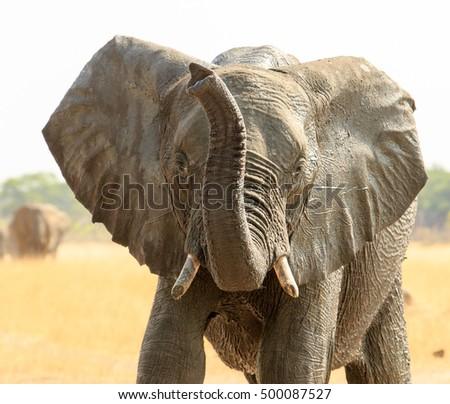 stock-photo-isolated-elephant-with-trunk