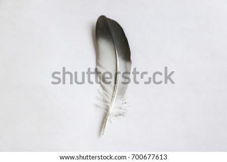 Isolated feather bird dove on white background for design #700677613