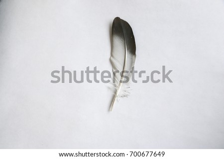 Isolated feather bird dove on white background for design #700677649