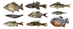 Isolated fish collection set
