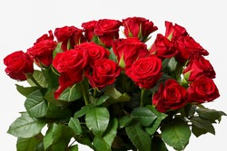 isolated flowers red roses