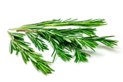 Isolated fresh green rosemary leaves, twigs and branches on white background