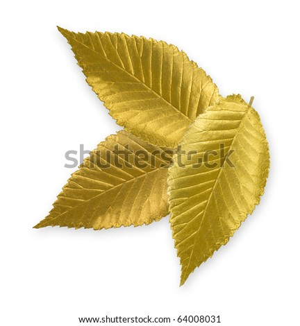 Isolated gold elm leaves