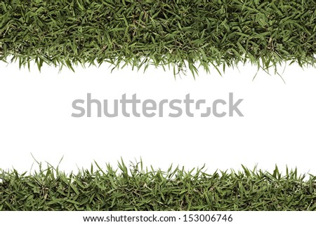 Isolated grass leave copy space for text on white background