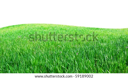 Isolated green grass. Element of design.