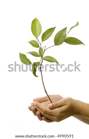 Isolated hands holding a new tree with green leaves