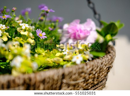 Isolated hanging basket shows a variety of pretty flowers as seen in early summer.
