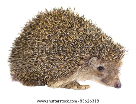 Isolated Hedgehog