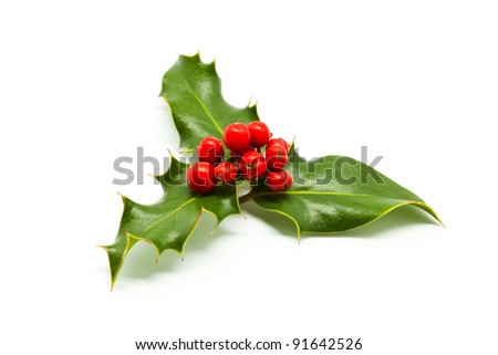 Isolated Holly Branch and Red Berries Foto stock ©