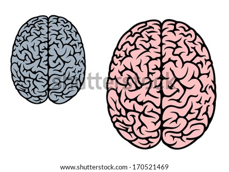 Isolated human brain in red and gray colors for medicine design