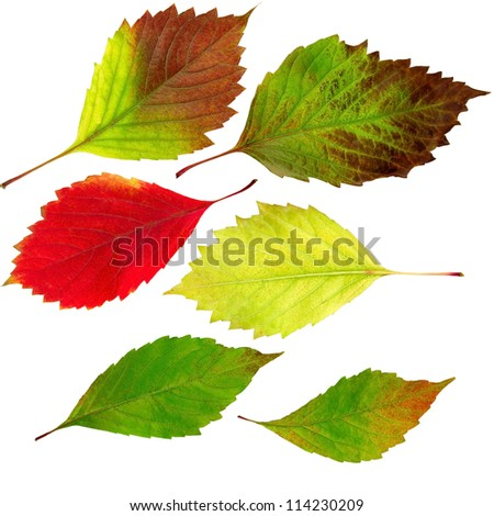 Isolated image of autumn leaves on a white background