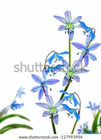 isolated image of flower on a white background