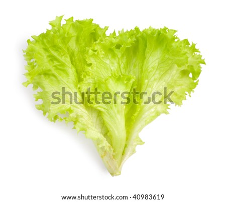 isolated leaf of salad