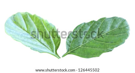 Isolated Leafs with Clipping Path