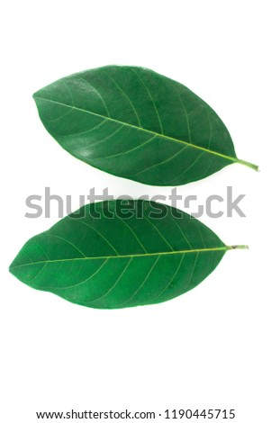 Isolated leaves on the white background. It have lemon leave ,Jack leave, Palm leave, and Herb Leave.