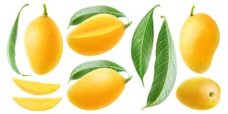 Isolated mango collection. Thai yellow mango fruits of different shapes, pieces and leaves isolated on white background