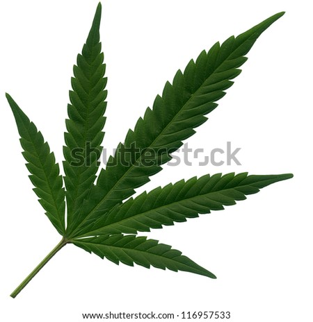 Isolated Marijuana leaf