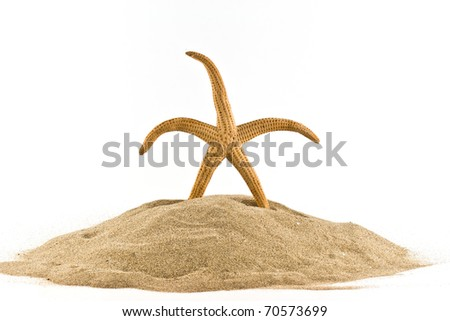 isolated marine star on white