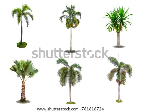 Isolated of mix trees with white background - Shutterstock ID 761616724