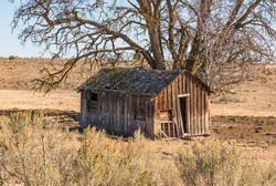 Isolated Old Dilapidated Wooden Shack, House in the Rural Countryside Underneath an Old Oak Tree.