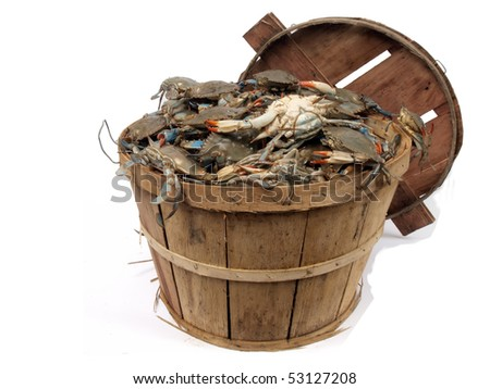 isolated  on a white background photo of a bushel basket of live blue crabs from the Chesapeake Bay of Maryland