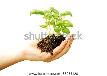 isolated on white woman's hand keeping soil and plant