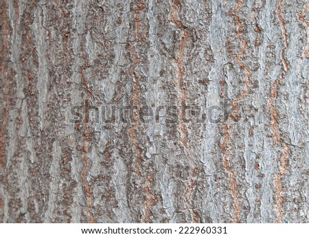 Isolated on wood texture background. #222960331