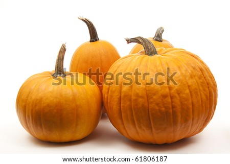 isolated orange pumpkins  for halloween decoration