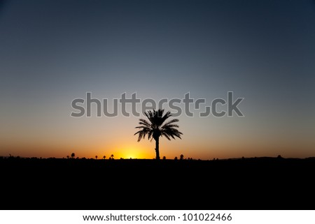 Isolated palm in Morocco desert on sunset